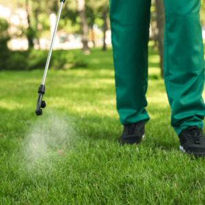 spraying lawn